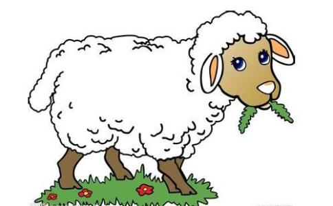 属羊的和什么属相较配
