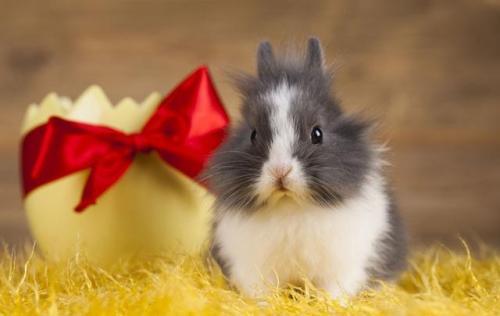 贺新年祝福语 鼠年谐音祝福语