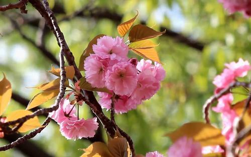 三月的诗句 三月的诗句唯美
