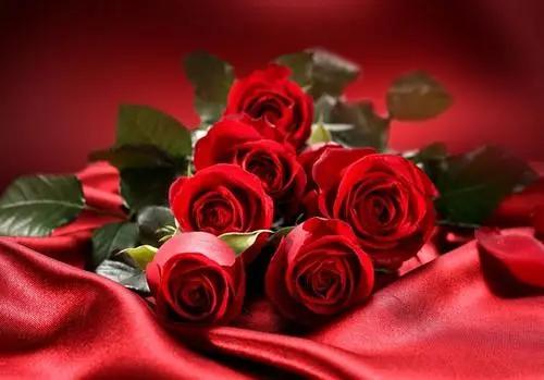 送花给老婆送什么花比较好 给老婆送花送多少朵合适